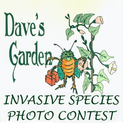 Dave's Garden 2012 Invasive Species Photo Contest