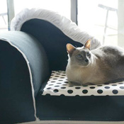 Cat Chaise