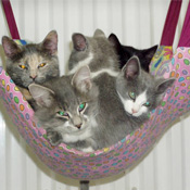 Cats in a Hammock