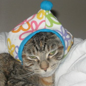 Cat in a Pointy Hat