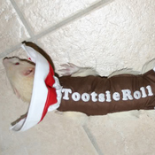 Tootsie Roll Ferret